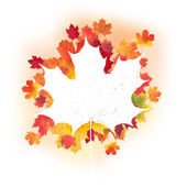 Autumn leaves design — Stock Photo
