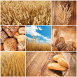 Wheat harvest concept — ストック写真