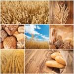 tarwe oogst concept — Stockfoto