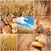 Wheat harvest concept — Stock Photo