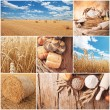 Wheat harvest concept — Stockfoto