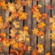 Autumn leaves — Stock Photo #33457185