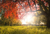 Autumn tree — Stock Photo