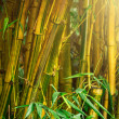 Bamboo trees — Stock Photo #34270145
