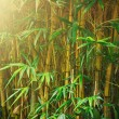 Bamboo trees — Stock Photo #34491085