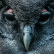 Owl face — Stock Photo