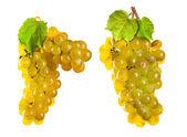 白い背景上に分離されて白ワイン ・ ブドウ — ストック写真