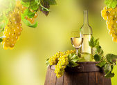Wine in vineyard — Stock Photo