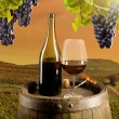 Wine in vineyard — Stockfoto