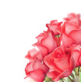 Ramo de rosas — Foto de Stock