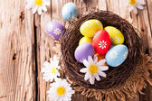 Easter eggs on wood — Stockfoto