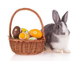 Rabbit with basket on white background — Stok fotoğraf