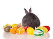 Królik z jaj na białym tle — Zdjęcie stockowe