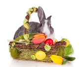 Rabbit in basket on white background — Stok fotoğraf