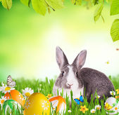Easter rabbit in grass — Stock Photo