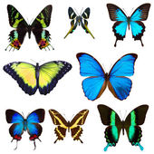 Collection of butterflies — Foto de Stock