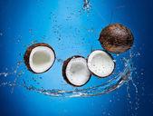 Cracked coconuts in water splash — Stock Photo