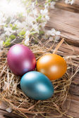 Spring white blossoms with easter eggs — Stock Photo