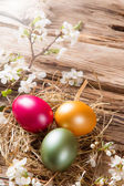 Spring white blossoms with easter eggs — Stockfoto