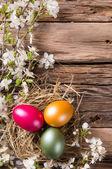 Uova di Pasqua su legno — Foto Stock
