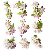 Spring blossoms on white background — 图库照片