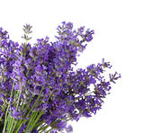 Lavender on white background — Foto de Stock