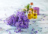 Květy levandule — Stock fotografie