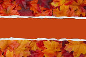 Autumn Leaves Torn Background for your message or invitation — Stock Photo