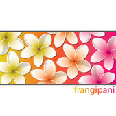 Coloured frangipani background in vector format — Stock Vector
