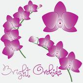 Orchidee Blume set — Stockvektor