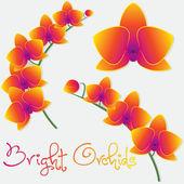 Conjunto de orquídeas Phalaenopsis — Vector de stock