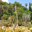 Cactus garden — Stock Photo #12057840