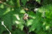 Spider closeup — Stock Photo