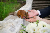 Hands of groom and bride with squirrel — ストック写真