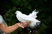 White Pigeon and Female Hand — Stock Photo