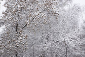 Winter forest after snowfall — Stockfoto