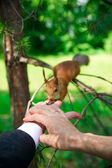 Hands of groom and bride with squirrel — Stock Photo