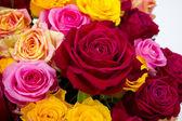 Red rose closeup — Stock Photo