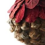 Christmas pine cone — Stock Photo #42337779
