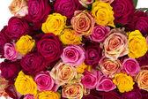 Multicolored roses — Stock Photo