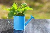 Nettles in a blue watering can on the table — Stock Photo