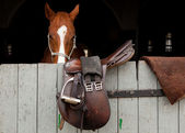 Horse in the stable with the door slung saddle — Stock Photo