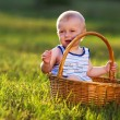 Little boy in the meadow in the basket — Stockfoto