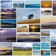 Tasmanian collage - Stock Photo