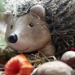 Stock Photo: Hedgehog in autumn leaves before hibernation