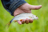 Fish lies in hand — Stockfoto