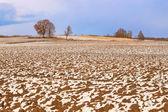 O campo na neve. — Fotografia Stock