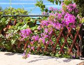 Flowering bush. — Stock Photo