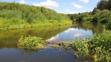 Landschap met de rivier. — Stockvideo