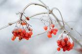 Winter fruit — Stock Photo